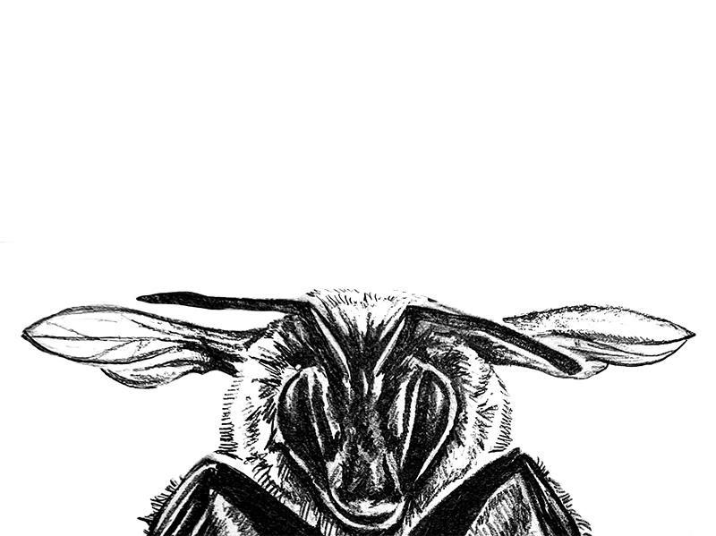 Barnyard Talk Animal Illustration